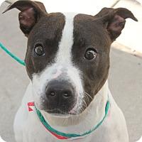 Adopt A Pet :: MEGAN - Clayton, NJ