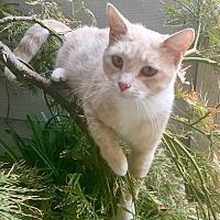 Adopt A Pet :: Sunny - Oakdale, CA