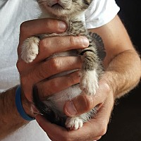 Adopt A Pet :: Bippity - Naperville, IL
