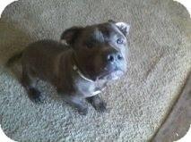 Pit Bull Terrier Mix Dog for adoption in Alliance, Nebraska - Frodo