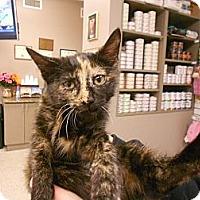 Adopt A Pet :: Caramel - Maywood, NJ