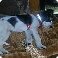 Adopt A Pet :: Nya - Wasilla, AK