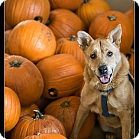 Adopt A Pet :: Emmie - Wickenburg, AZ