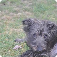 Adopt A Pet :: Utopia - Tumwater, WA