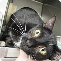 Adopt A Pet :: Lefty - Athens, GA