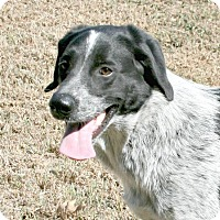 Adopt A Pet :: Trixie - Lufkin, TX
