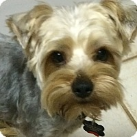 Adopt A Pet :: Jackson - Edmond, OK