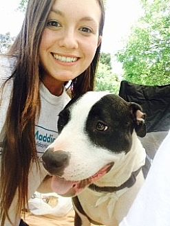 American Pit Bull Terrier Mix Dog for adoption in Concord, California - Arlo
