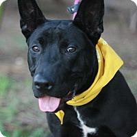Adopt A Pet :: Gibbs - Canoga Park, CA
