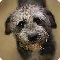 Adopt A Pet :: Stevie - Canoga Park, CA
