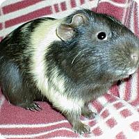 Adopt A Pet :: Jeffrey - Steger, IL
