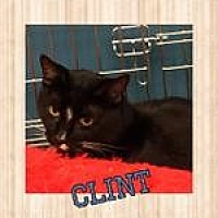Adopt A Pet :: Clint - Westbury, NY