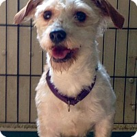 Adopt A Pet :: Georgette - Coudersport, PA