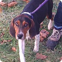 Adopt A Pet :: Nelson - Metamora, IN