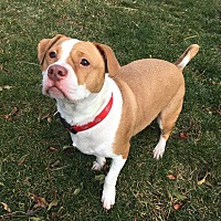 Adopt A Pet :: Cesar - Groton, CT