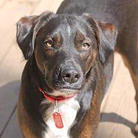 Adopt A Pet :: Riley - Bedford Hills, NY