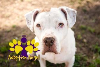Mixed Breed (Large) Mix Dog for adoption in Georgetown, Texas - June