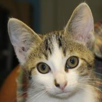 Adopt A Pet :: Amos - Robinson, IL