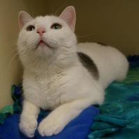 Adopt A Pet :: Leia - Verona, WI