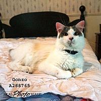 Adopt A Pet :: GONZO - Conroe, TX