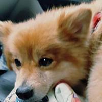 Adopt A Pet :: Bodie - Elizabethtown, PA