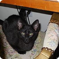 Adopt A Pet :: Annabel - CARVER, MA