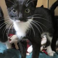 Adopt A Pet :: Phillip - Menomonie, WI