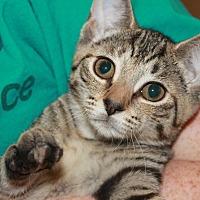 Adopt A Pet :: MAISEY - Clayton, NJ