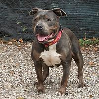 Adopt A Pet :: Paola - Santa Barbara, CA