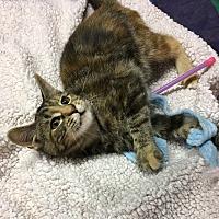 Adopt A Pet :: Alexa - Butner, NC