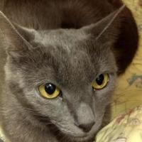 Adopt A Pet :: Baby - Parma, OH