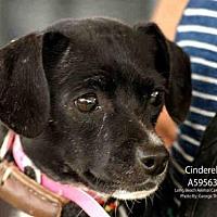 Adopt A Pet :: *CINDERELLA - Long Beach, CA