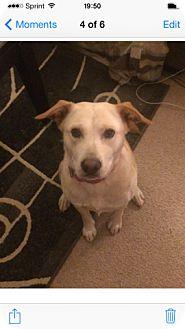 Labrador Retriever/Shepherd (Unknown Type) Mix Dog for adoption in Washington, North Carolina - Ava