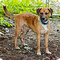 Adopt A Pet :: Cayden - Hastings, NY
