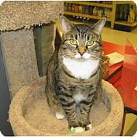 Adopt A Pet :: Polly - Warminster, PA