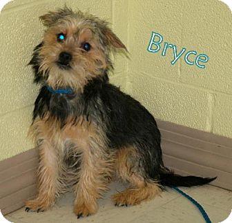 Terrier (Unknown Type, Medium) Mix Dog for adoption in Lewisburg, West Virginia - Bryce