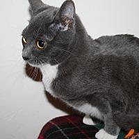 Adopt A Pet :: Helen - Santa Rosa, CA