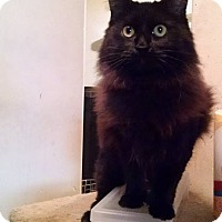 Adopt A Pet :: Nola - Walla Walla, WA