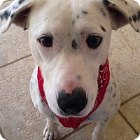 Adopt A Pet :: April - Allentown, PA