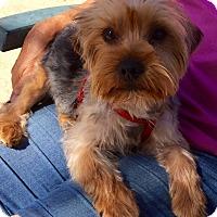 Adopt A Pet :: Stanley - Los Angeles, CA