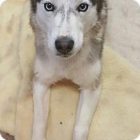Adopt A Pet :: Isabella - Apple valley, CA