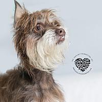 Adopt A Pet :: Patrick - Inglewood, CA