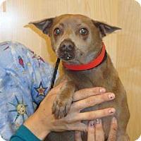 Adopt A Pet :: Hanna - Wildomar, CA