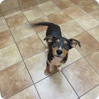 Adopt A Pet :: Tripp *Petsmart GB* - Appleton, WI