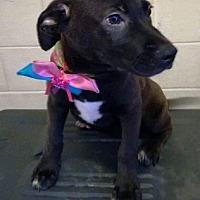 Adopt A Pet :: Dancer - BONITA, CA