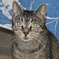 Adopt A Pet :: Wendy - North Branford, CT