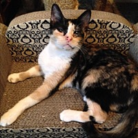 Adopt A Pet :: CALI - Ridge, NY