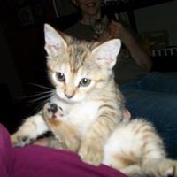 Adopt A Pet :: Timber - Clinton, MO