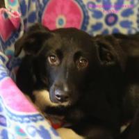 Adopt A Pet :: Cassie - Boone, NC