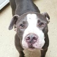 Adopt A Pet :: Levy - Bishop, GA